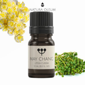 May-Chang-Essential-Oil